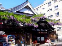 曙湯:藤の花で有名な浅草観音裏の銭湯
