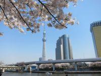 隅田公園の桜でお花見なら さくら祭りへ行こう!