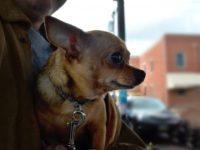 ペットと国内旅行!宿泊の方法や持ち物