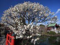 ディープな下町、亀戸エリアのおすすめ観光スポット10選