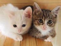 猫天国台東区!浅草・浅草橋などの猫カフェ、ペットカフェで癒されよう!