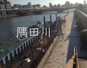 隅田川を知ろう!下町と共に変化する隅田川の歴史やイベント。